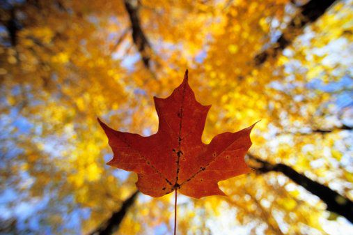 Ontario Parks Fall Color Report