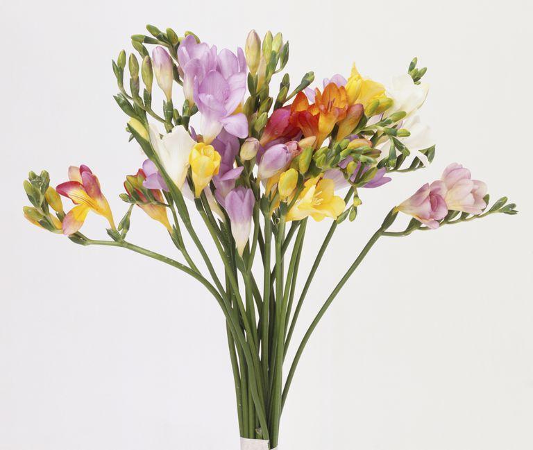 Flores particulares a la temporada de verano para boda - Flores de verano ...