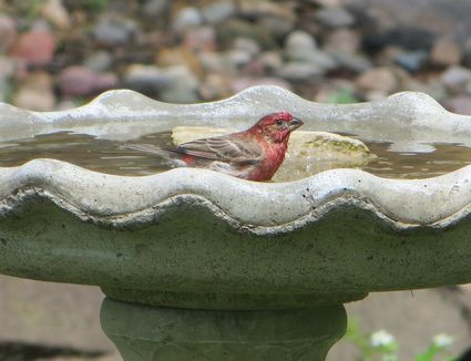 Bird Bath Placement Best Tips