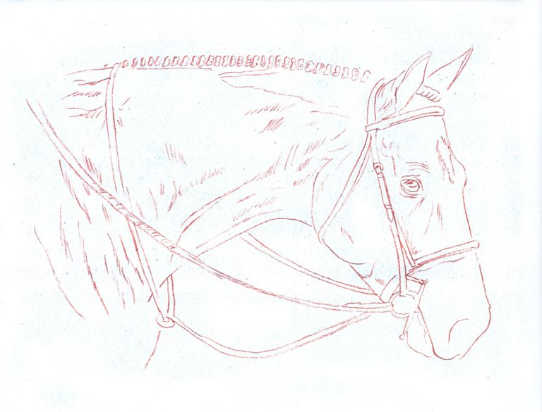 Line Drawing Pictures : Drawing lesson realist horse head in colored pencil