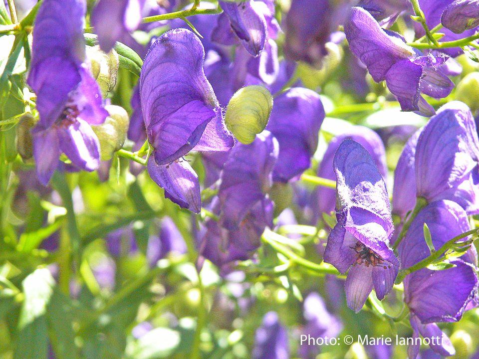 Top 10 Perennial Shade Plants for Your Garden