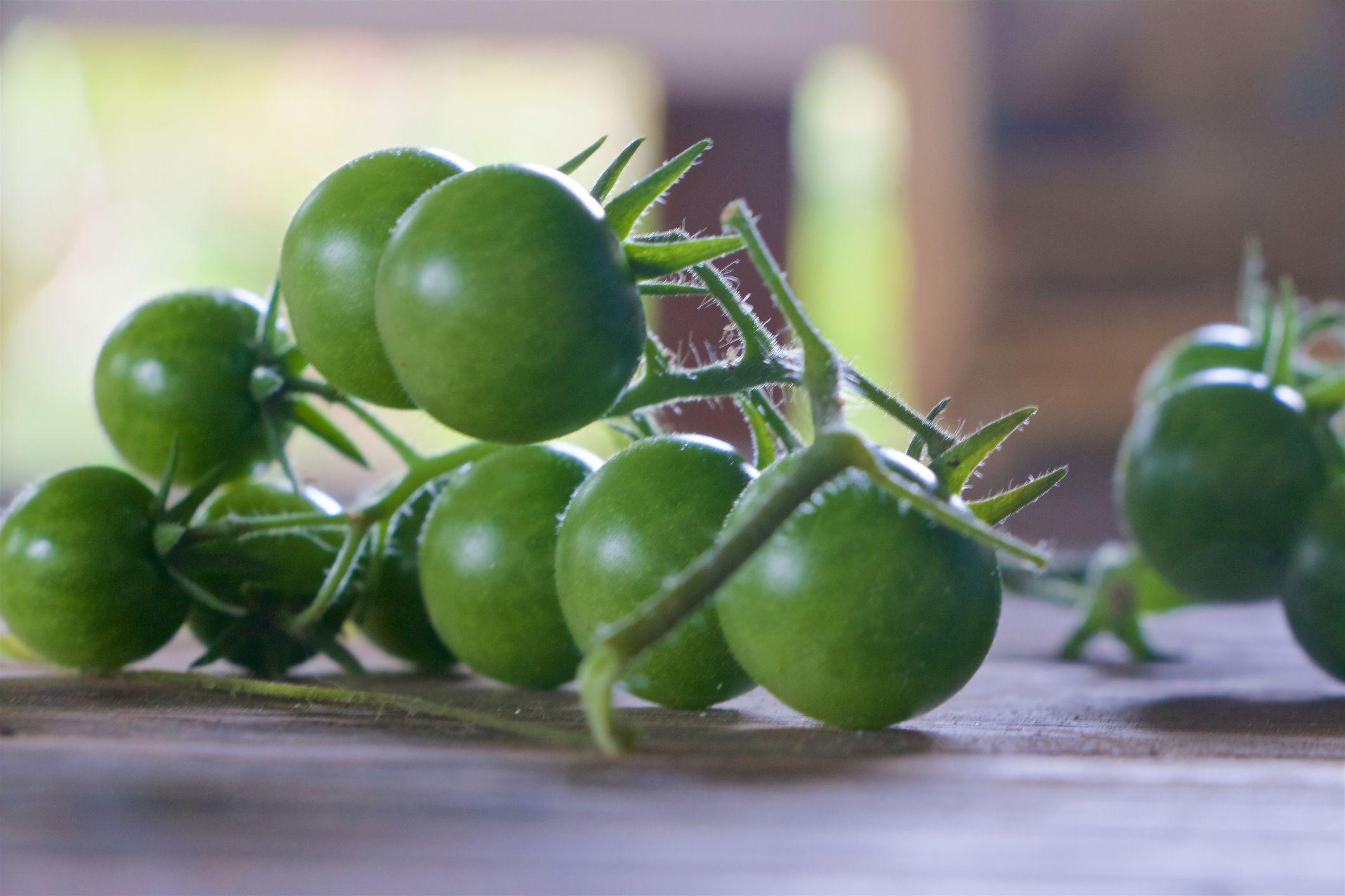 Green Cherry Tomato Pickle Recipe