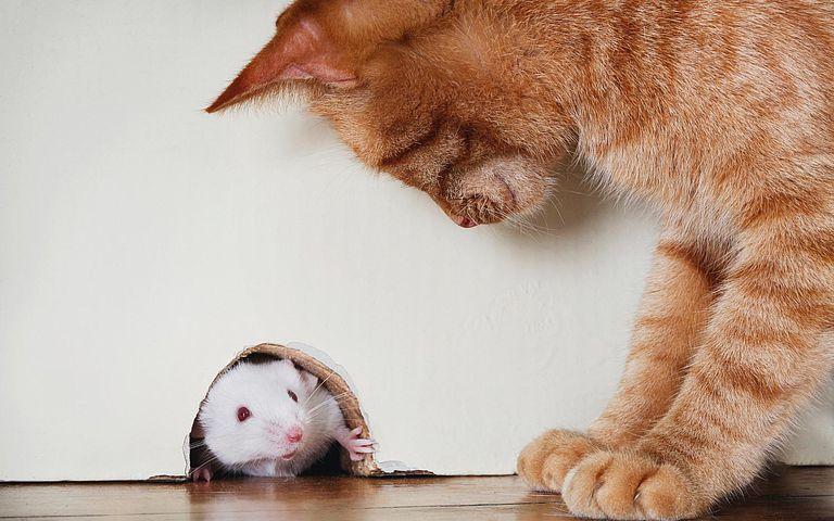 gato_raton.jpg