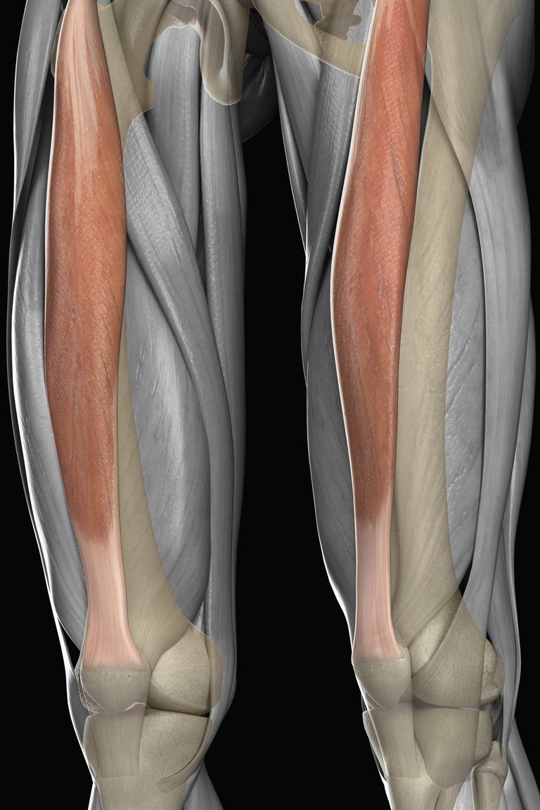 The rectus femoris muscle.