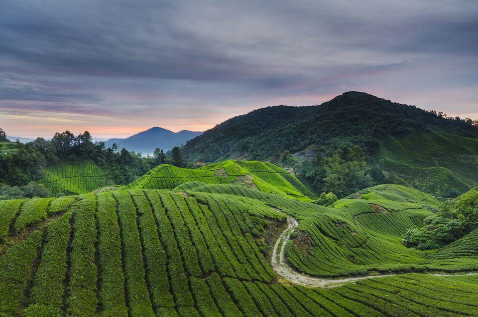 Malaysia, Pahang, Cameron Highlands, Brinchang