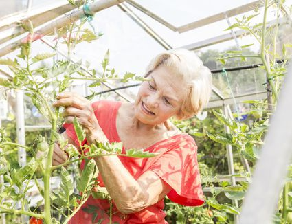 how to set tomato blossoms