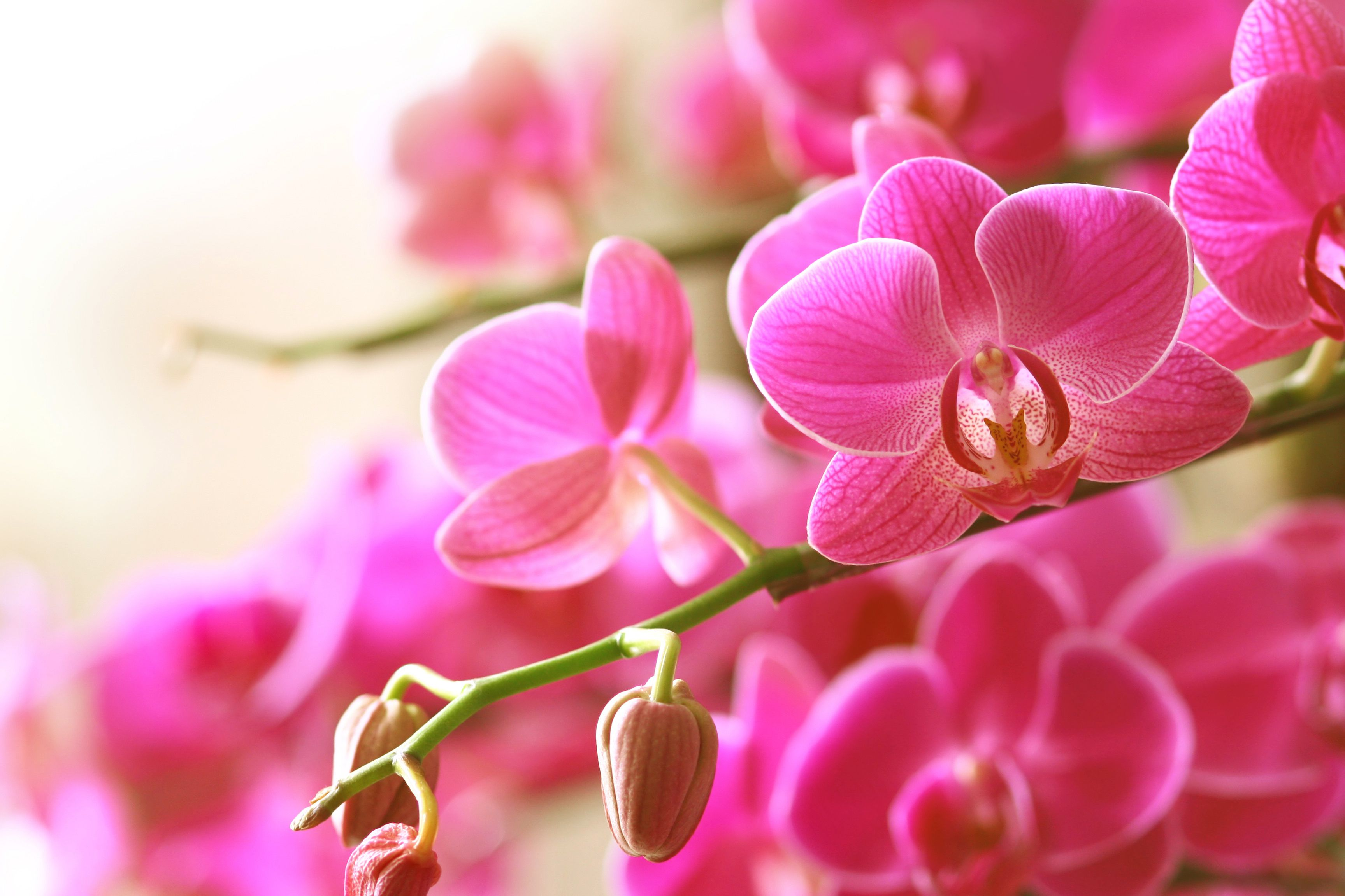 blooming pink orchid on a green branch 157480173 588b8b753df78caebc4665cb