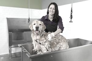 Learn how to start a self serve dog washing business solutioingenieria Images