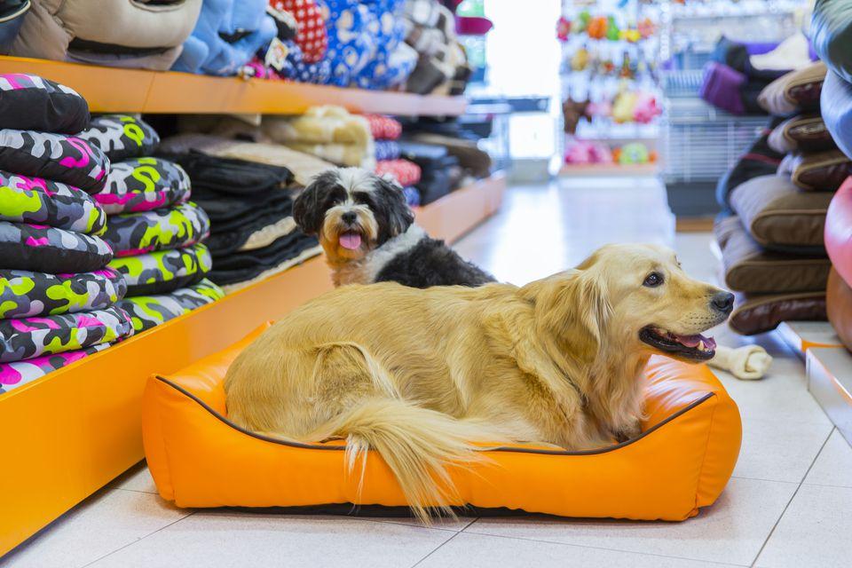 Pet store dog supplies