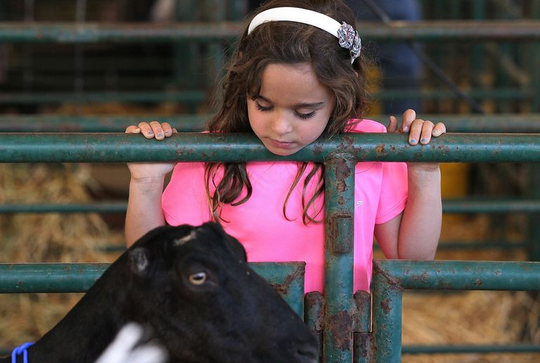 A child with a goat at a State Fair