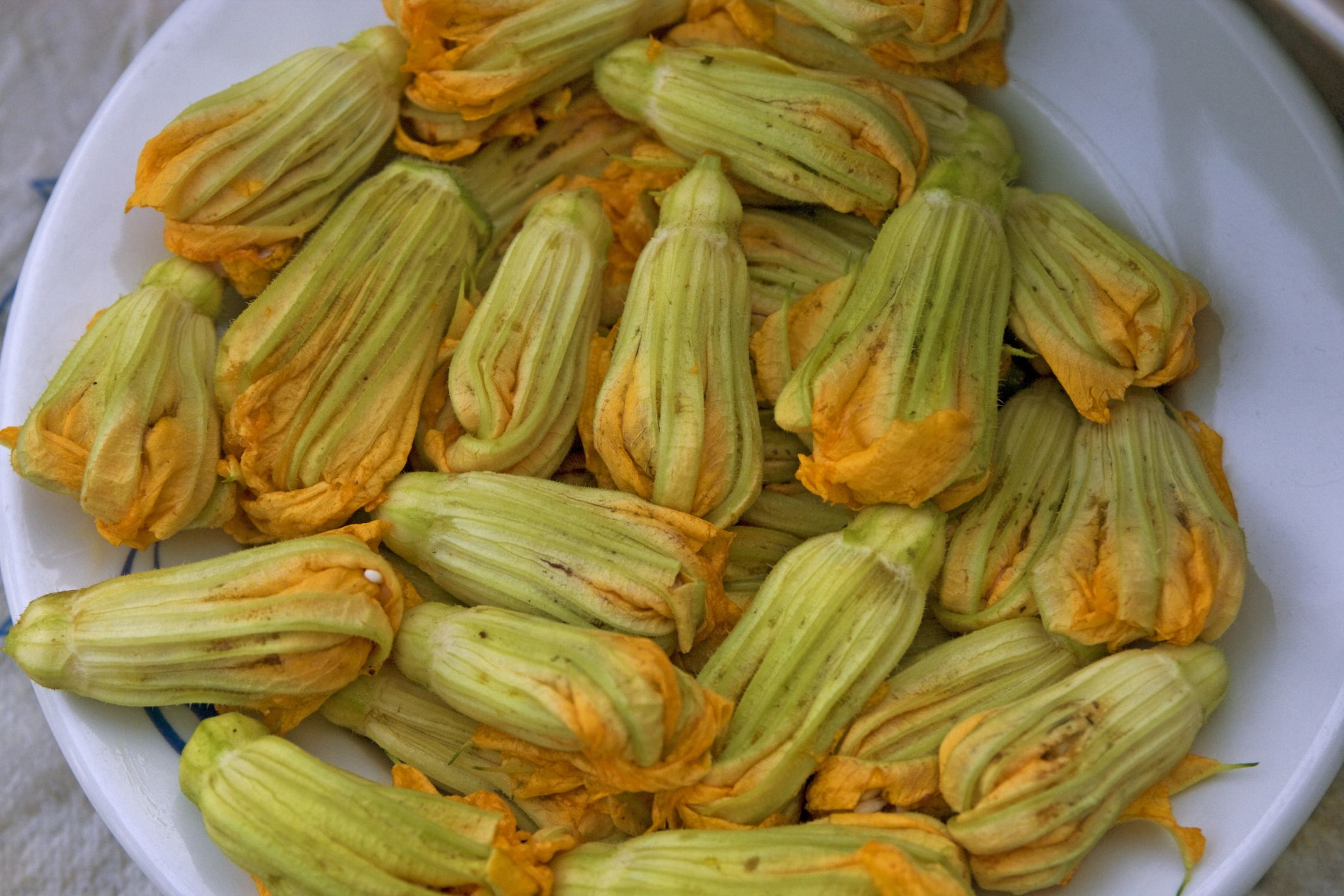 All About Zucchini Blossoms