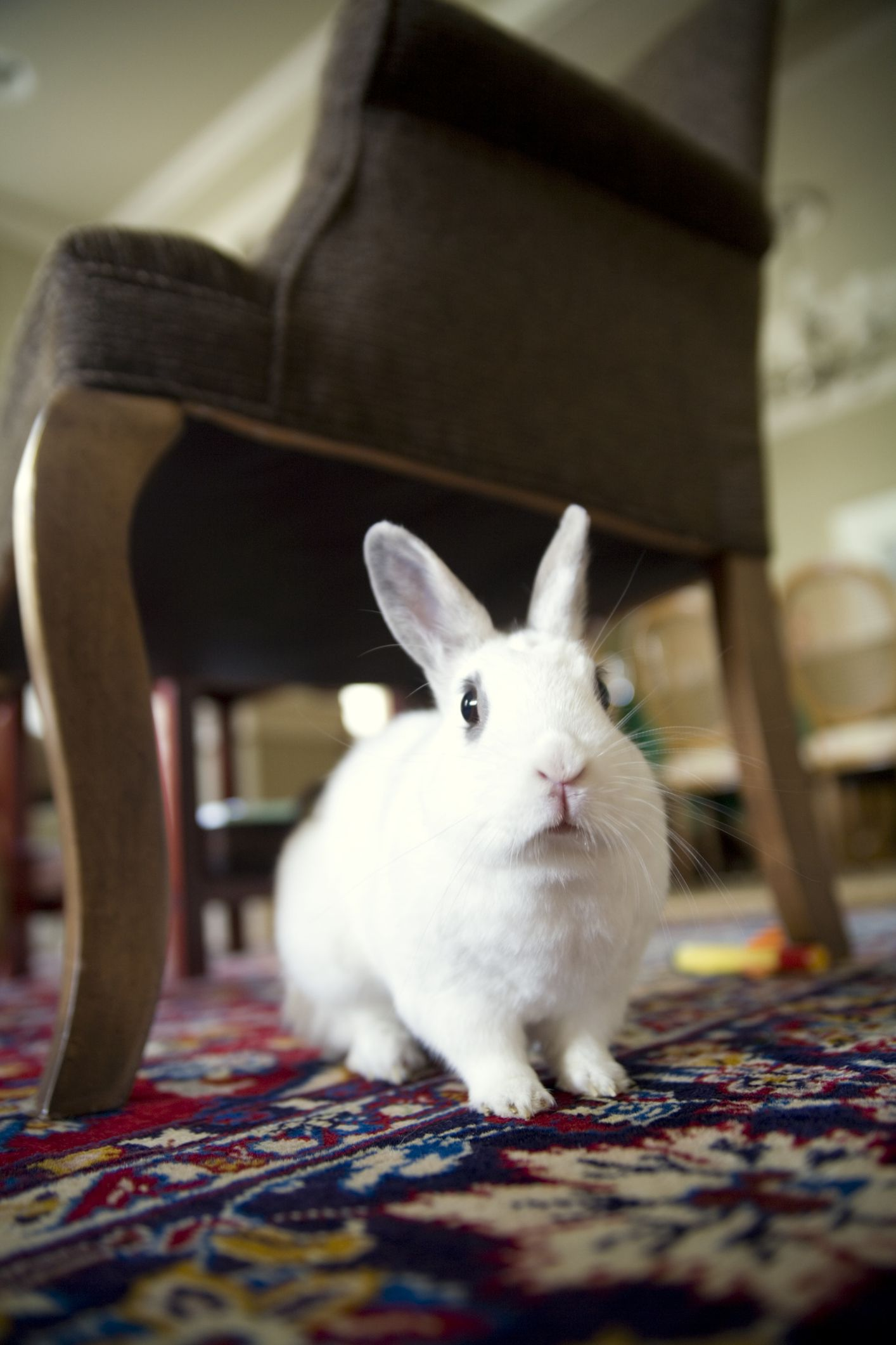 How To Rabbit Proof Your Home
