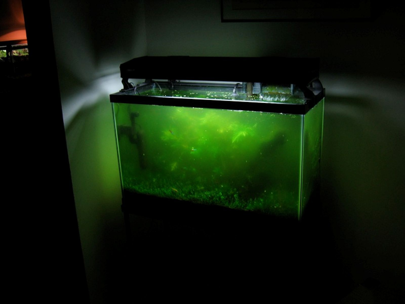 Causes and cures for green aquarium water for Algae bloom in fish tank