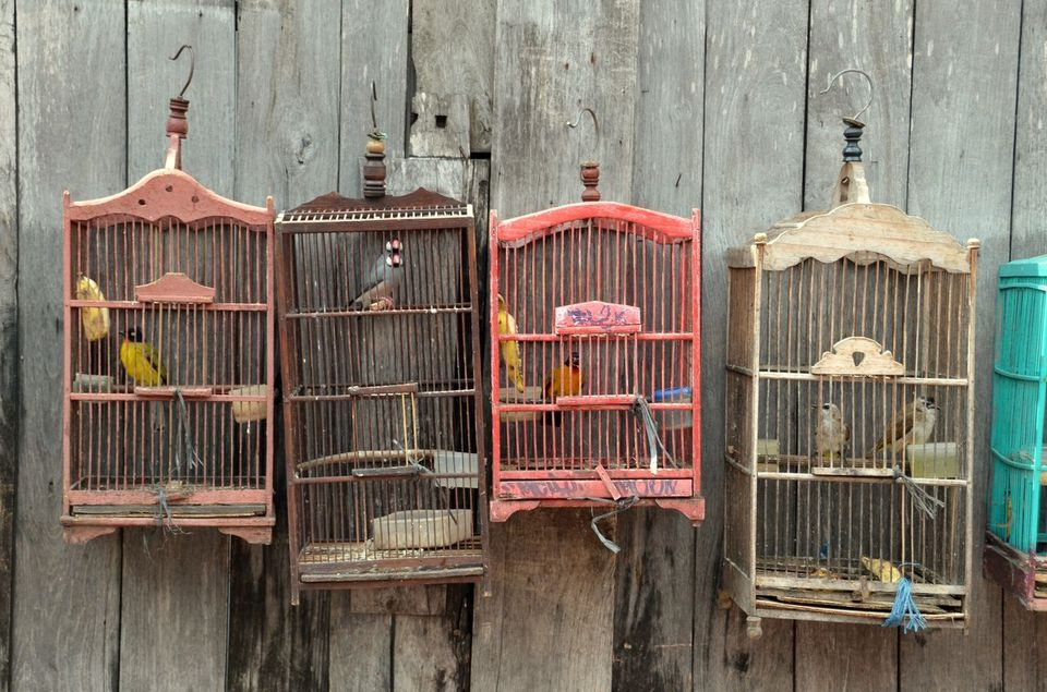 painted bird cages