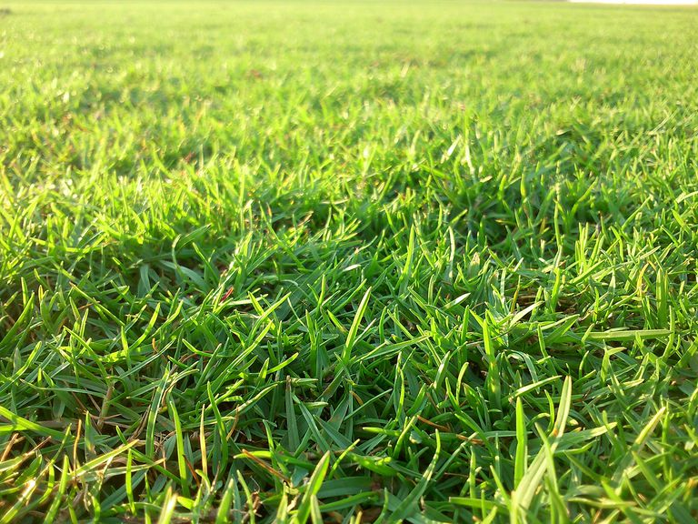 Close-Up View Of Green Grass.