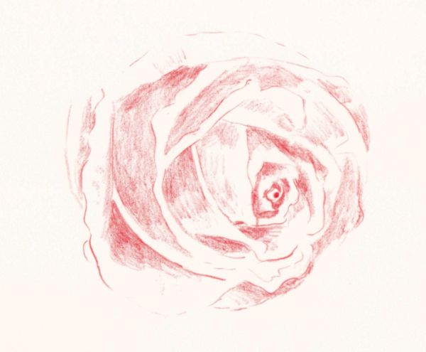 Simple Line Art Rose : How to draw a rose in colored pencil