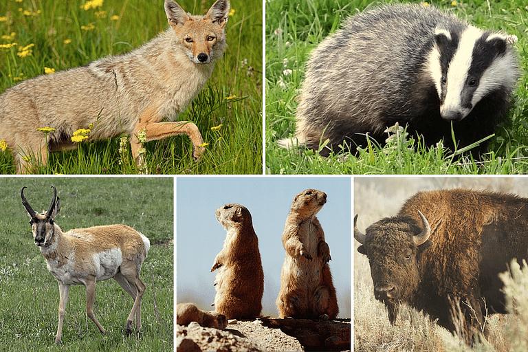 Prairie Animal Photos