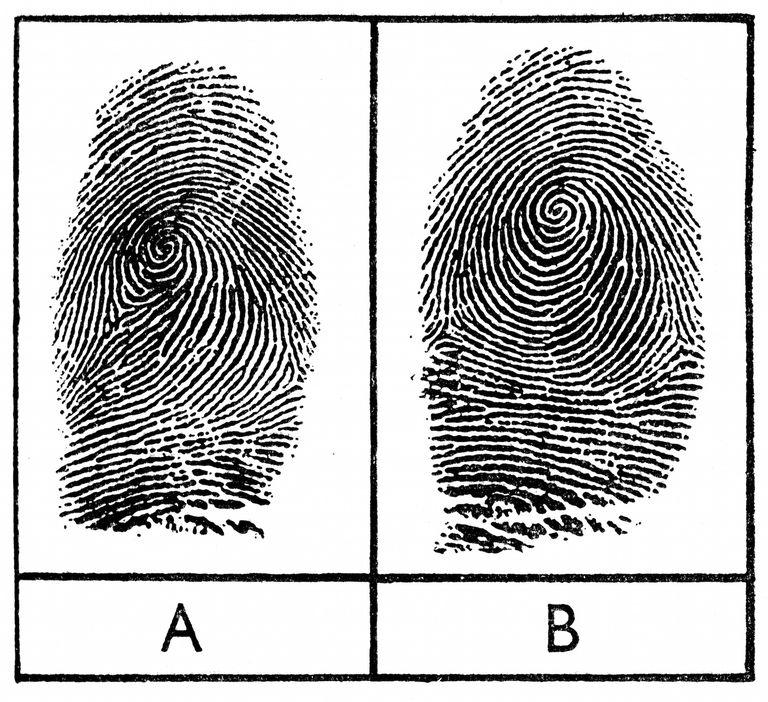 Do identical twins have identical fingerprints?