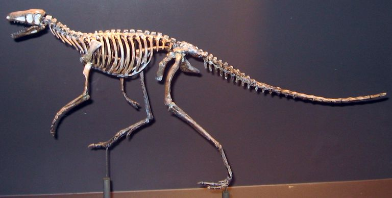 lagosuchus