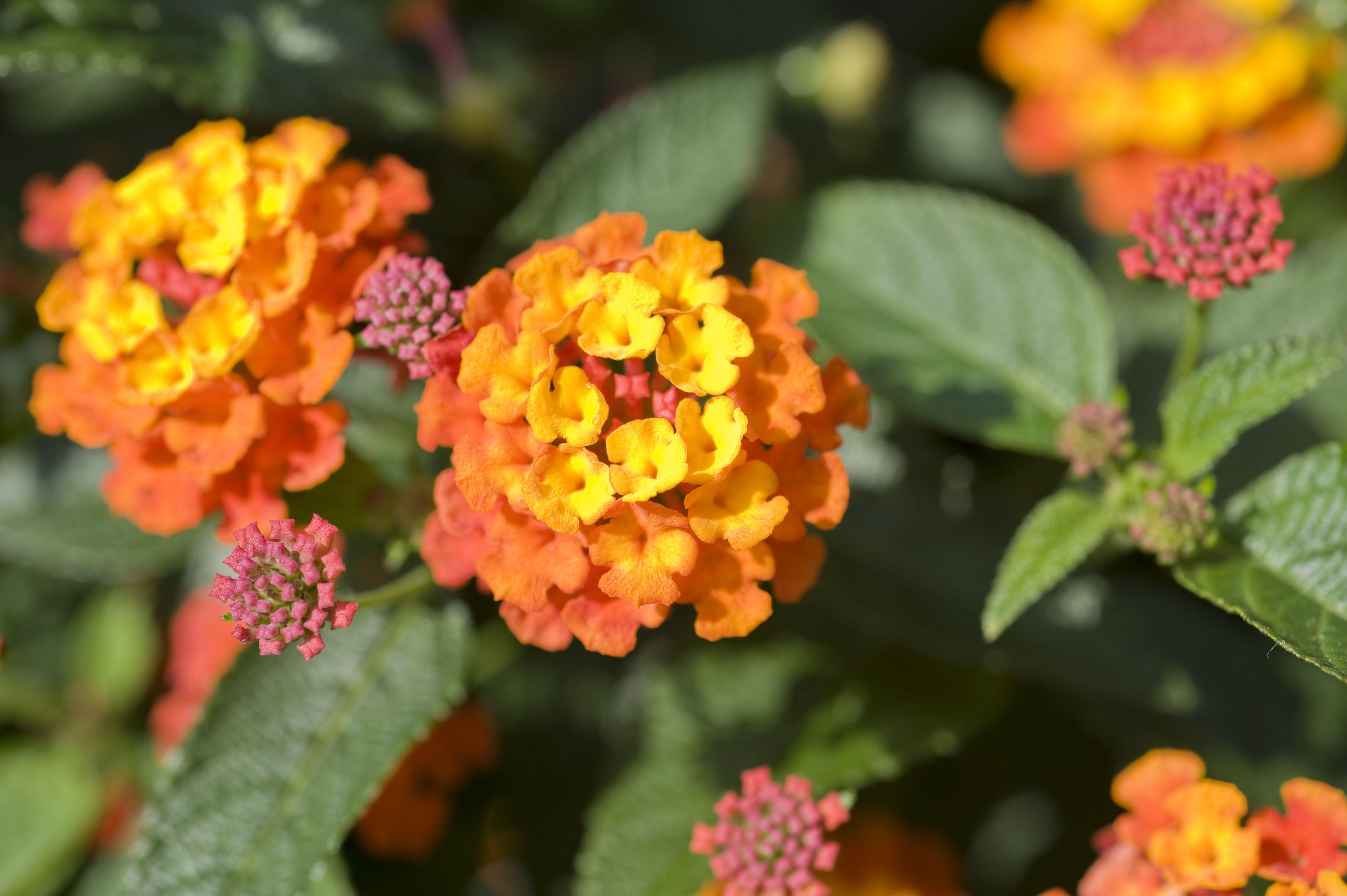 Pictures Of Orange Flower Varieties