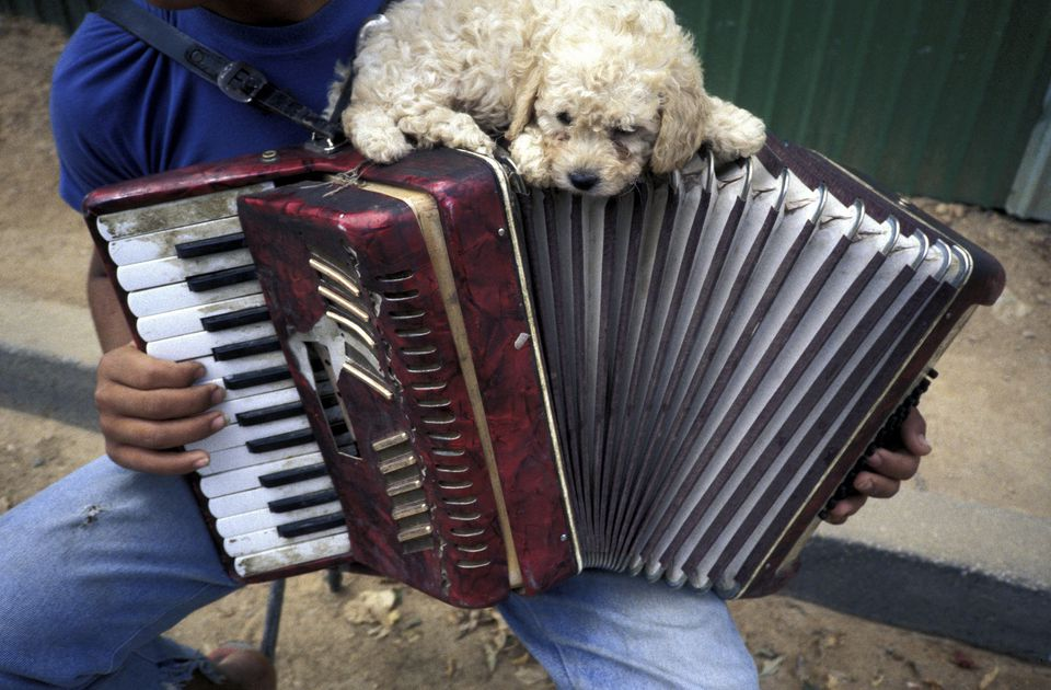 Accordion music and puppy