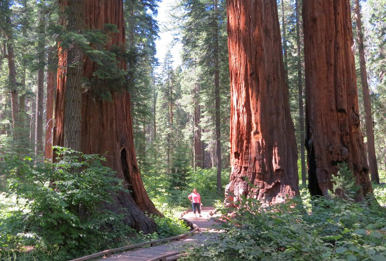 A California climax forest