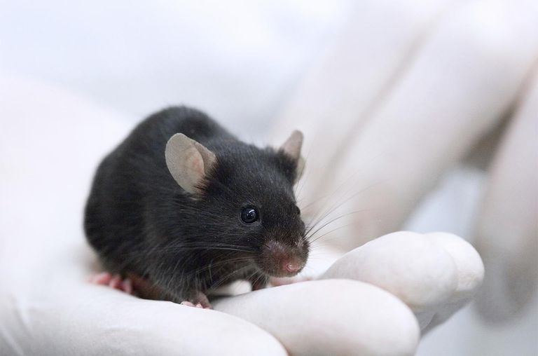 Testing on animals