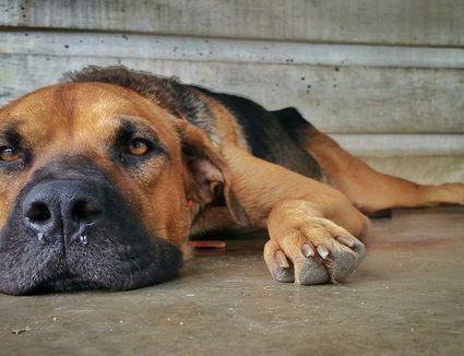 photo How to Prevent Canine Coronavirus