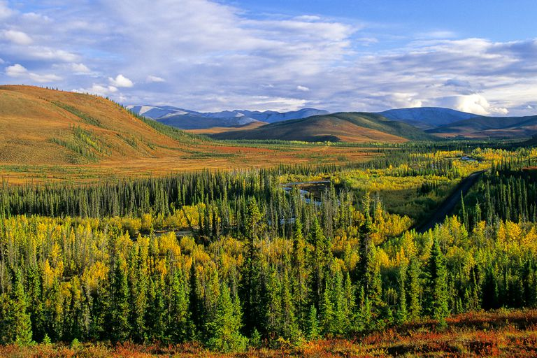Boreal forests are the world's largest terrestrial biome and account for more than one quarter of all the forested land on Earth.
