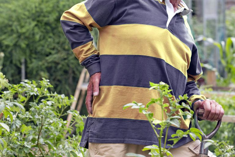 Senior Man Suffering From Backache Working In Vegetable Garden