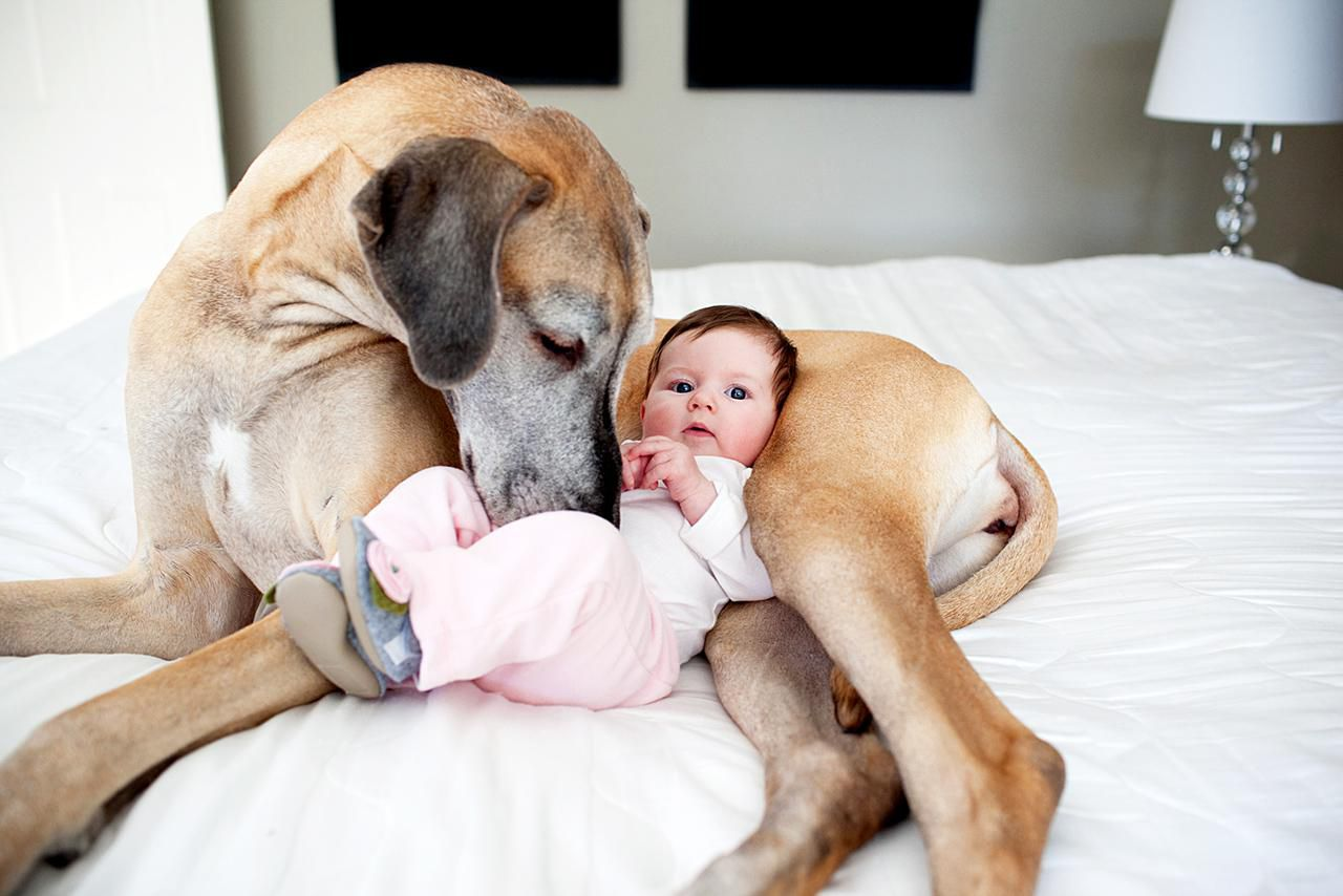 15 adorable photos of puppies and babies pridebites
