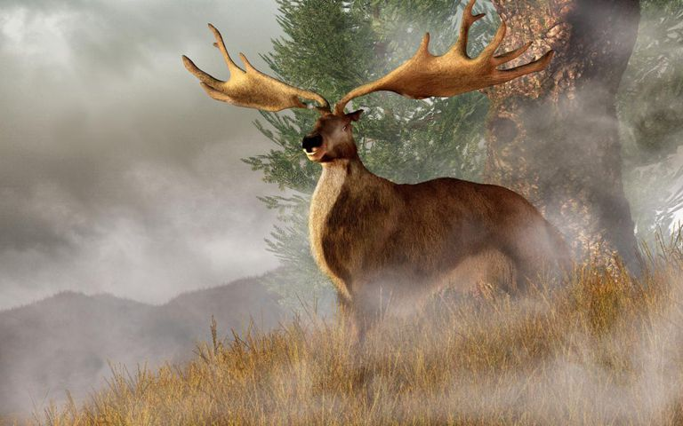 An Irish Elk stands in deep grass on a foggy hillside.