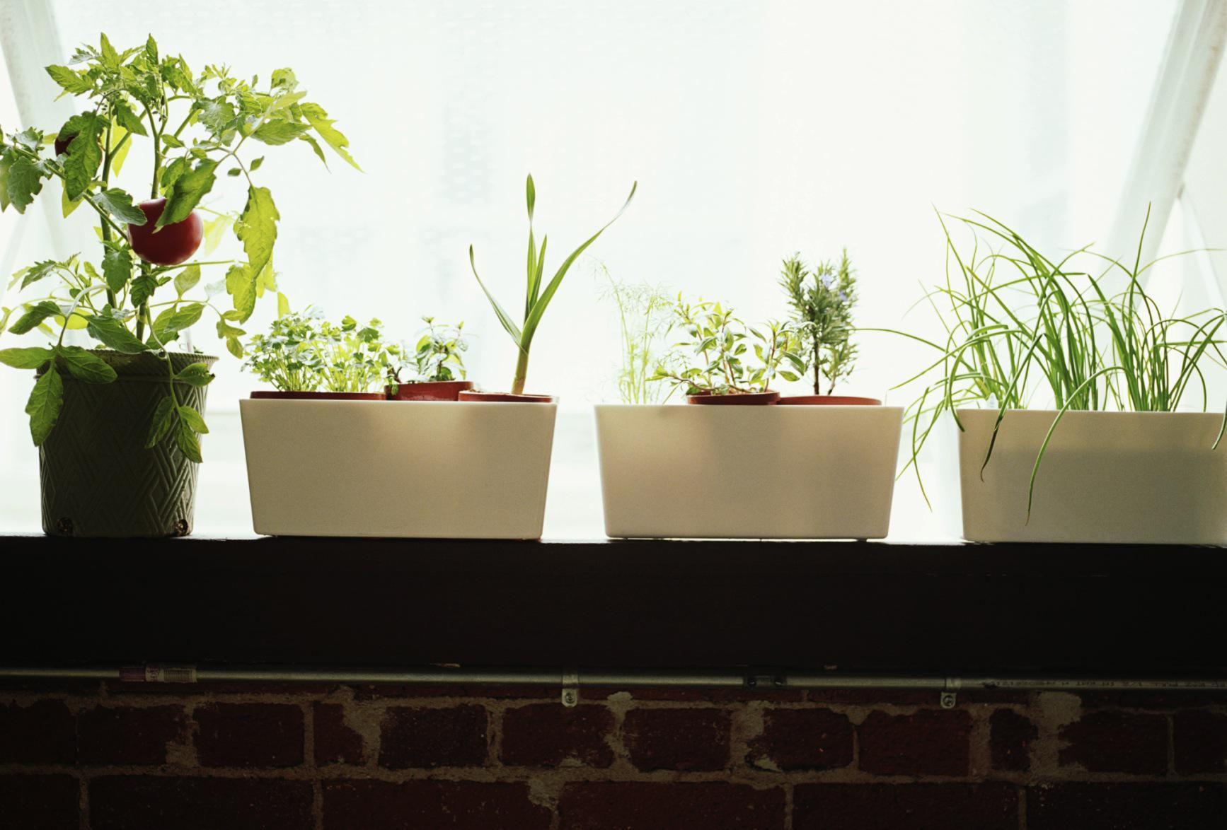 how to grow an indoor herb garden
