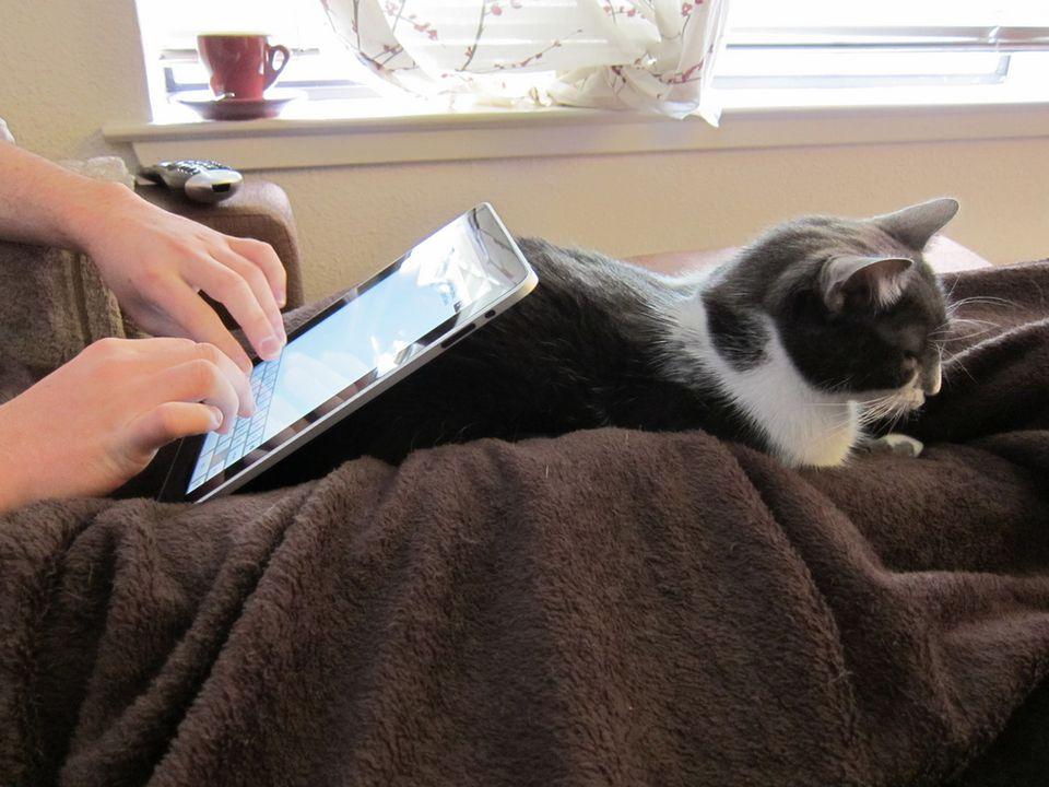 Cat iPad Stand