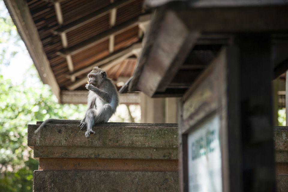 Sacred Monkey Forest Sanctuary, Ubud Monkey Forest, Bali, Indonesia