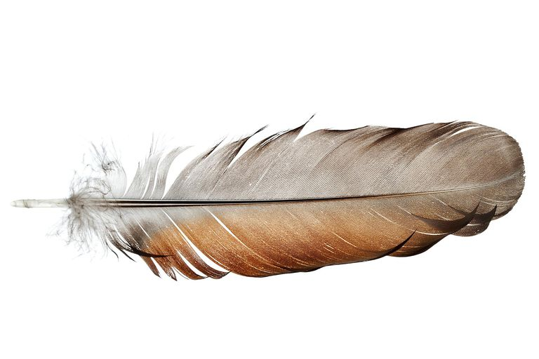 Feathers are unique to birds, they are a defining characteristic of the group.