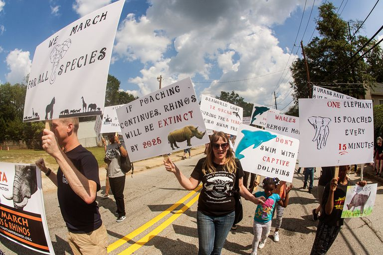 Save to Board Animal Rights Activists Walk With Signs In Atlanta Festival Parade