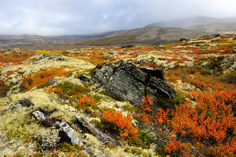 Autumn tundra landscape in Norway, Europe. Photo © Paul Oomen / Getty Images.