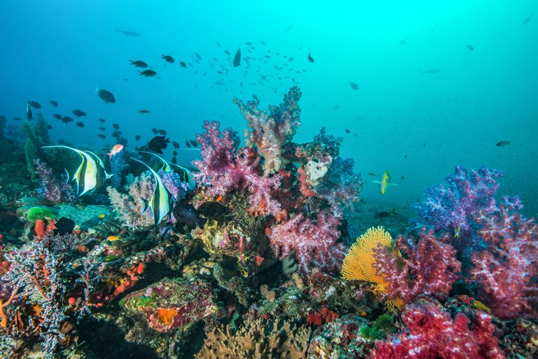 Colorful Coral Reef, Similan Islands, Thailand