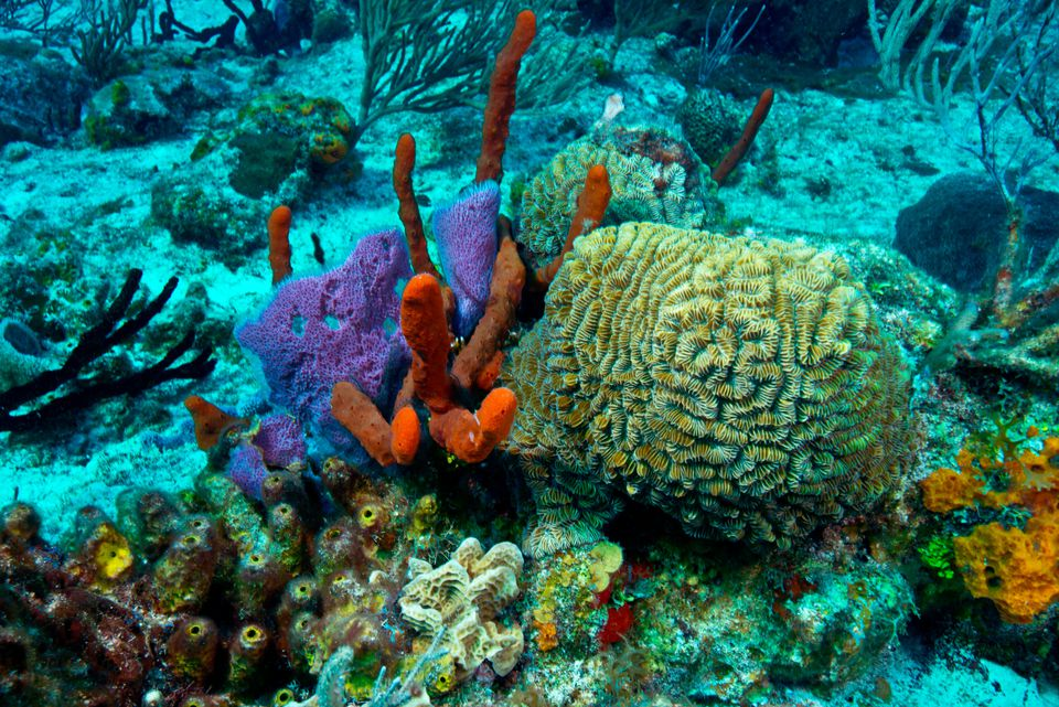 Mesoamerican Barrier Reef