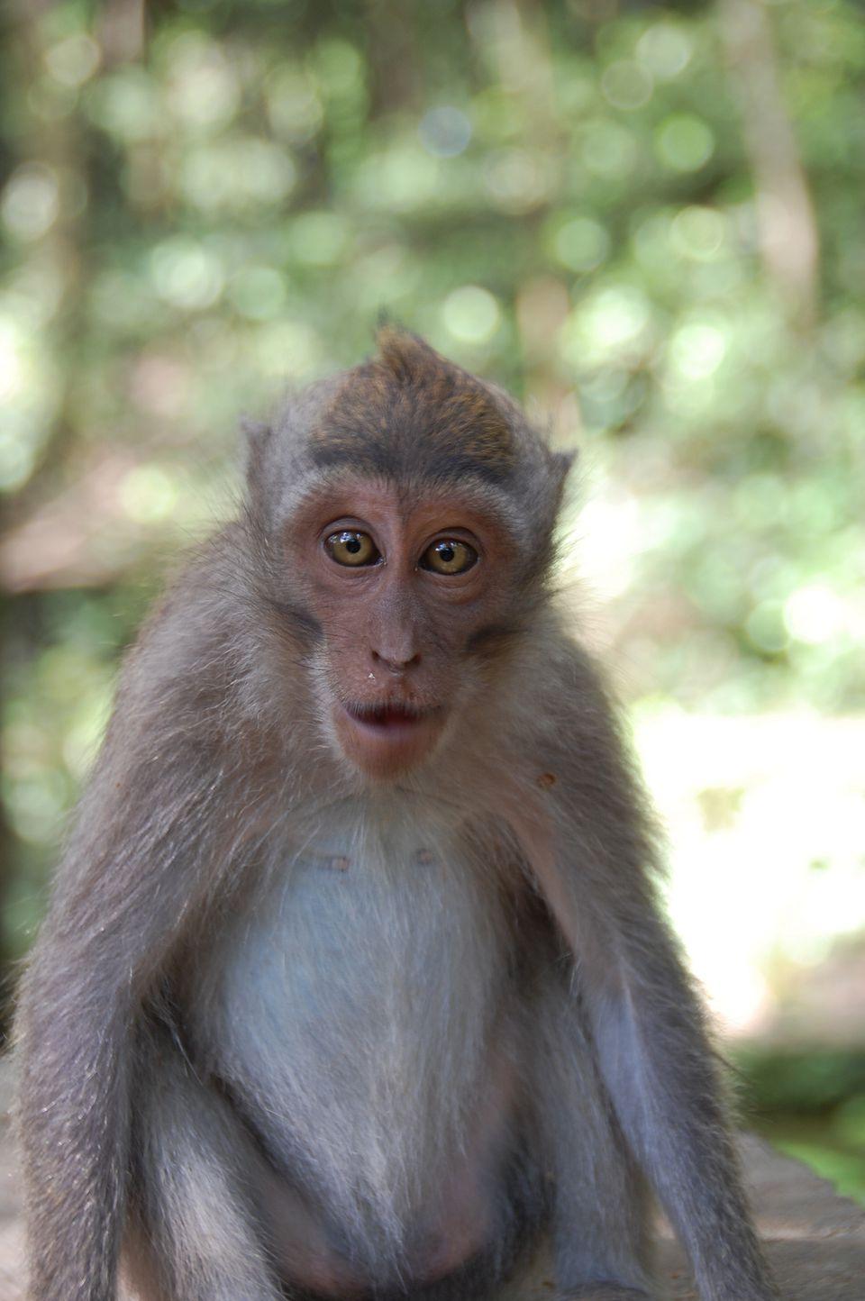 monkeys in asi