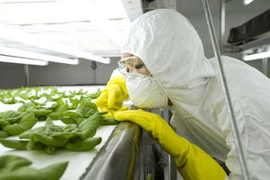 Scientist in green house examining plant, close-up