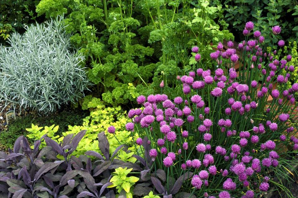 planning planting a gettyimages herbs and an garden herb
