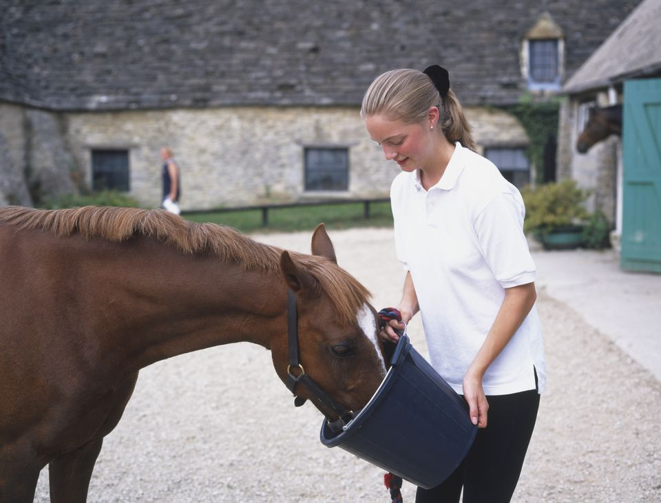 Girl feeding brown Horse (Equus caballus) from bucket, side view