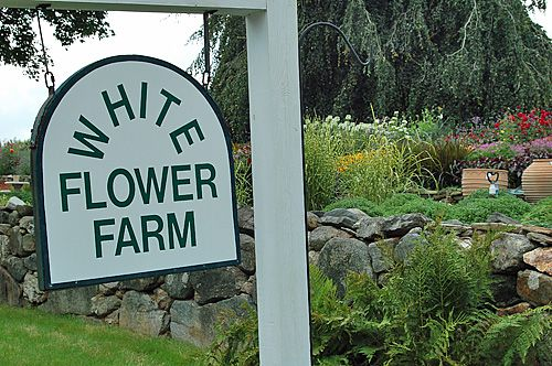 White flower farm in litchfield ct photo tour welcome to white flower farm mightylinksfo Choice Image