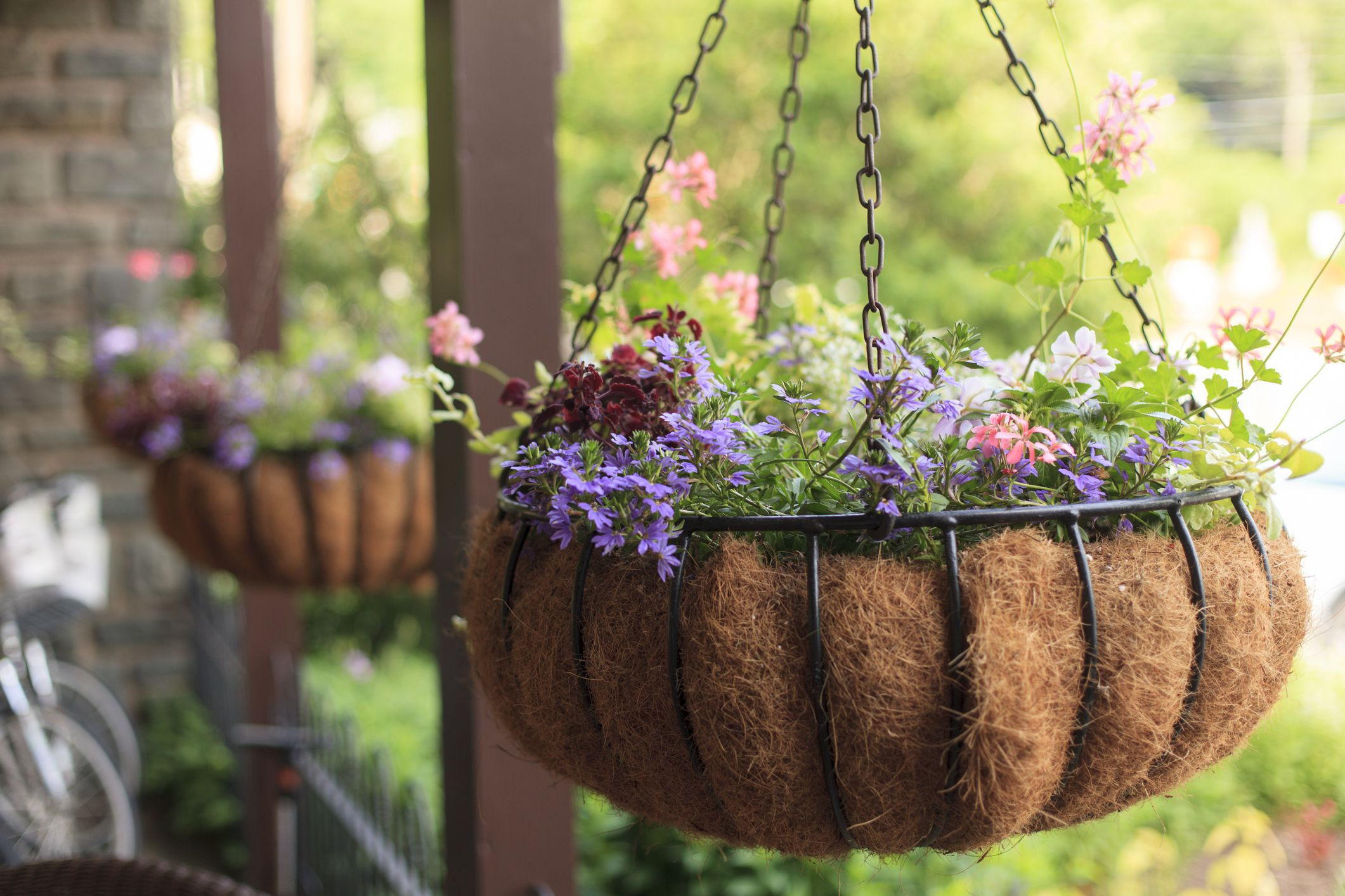 plant a flowering hanging basket. Black Bedroom Furniture Sets. Home Design Ideas