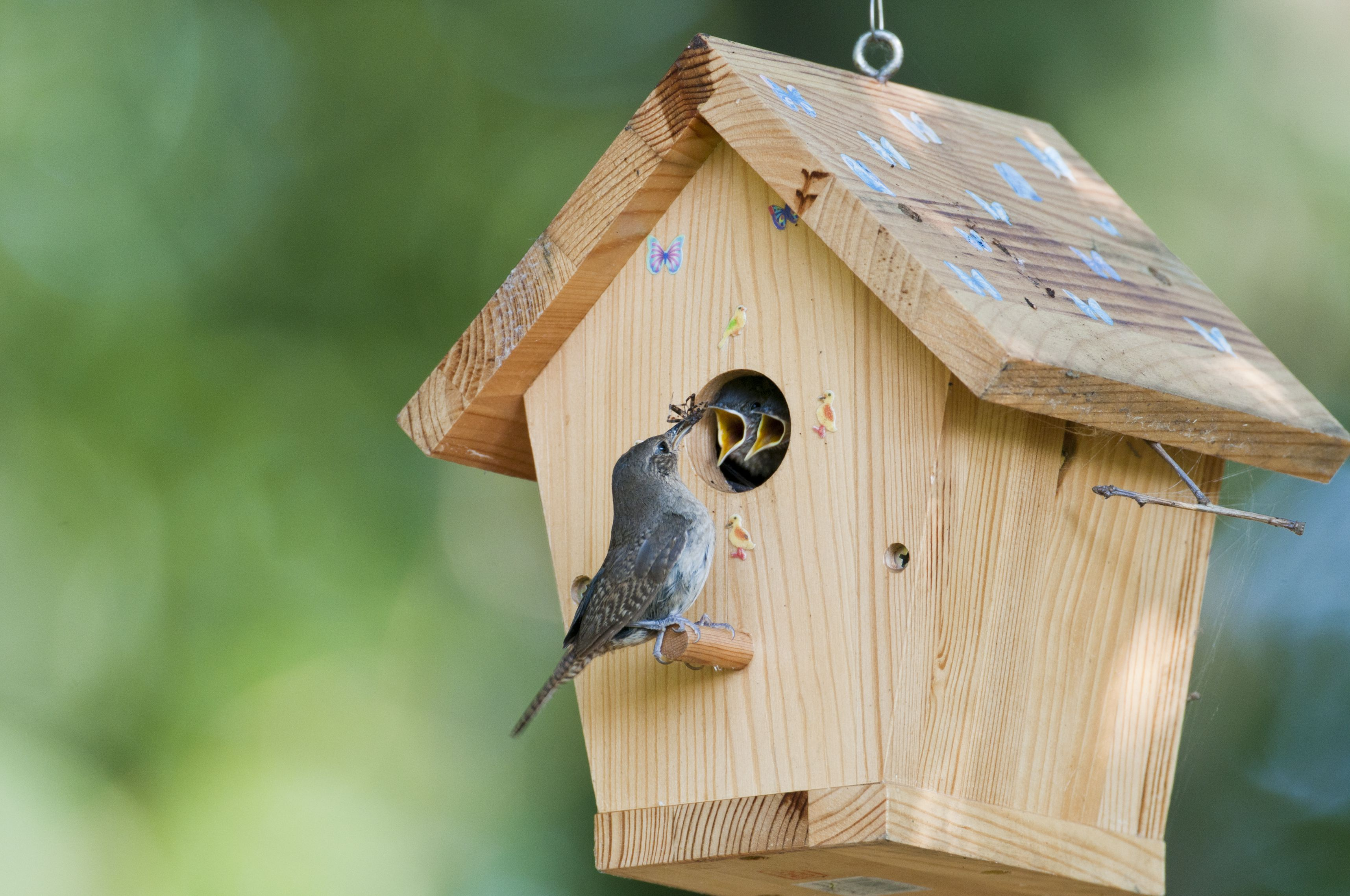 Attract birds with shelter right in your backyard for Different types of birdhouses