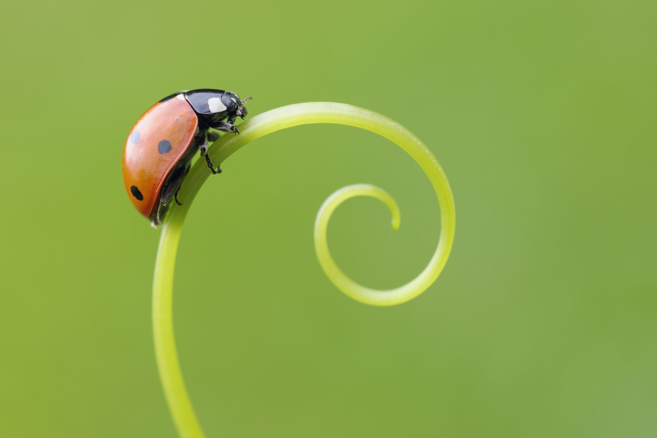 10 fascinating facts about ladybugs