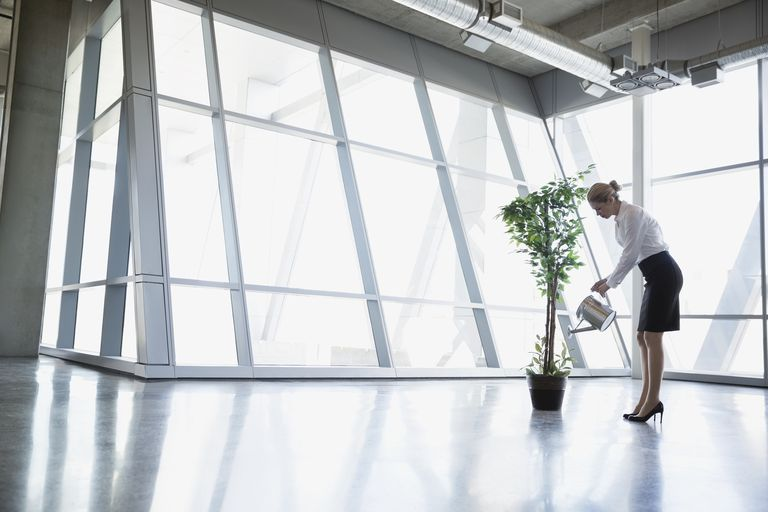Woman watering potted plant in office