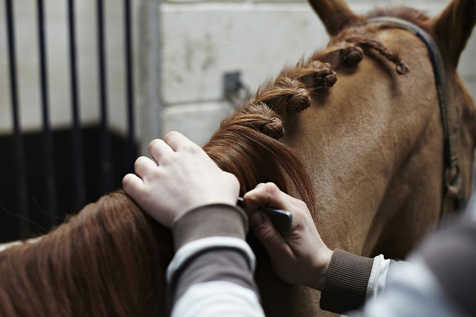 Horse with braids in hair.